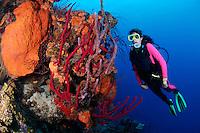 nr0457-D. scuba diver Melissa Cole (model released) admires coral reef ablaze with sponge colors.  red Erect Rope Sponges (Amphimedon compressa), Orange Elephant Ear Sponge (Agelas clathrodes), Lavendar Rope Sponge (Niphates erecta). Belize, Caribbean Sea.<br /> Photo Copyright &copy; Brandon Cole. All rights reserved worldwide.  www.brandoncole.com