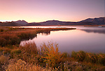 Montana, Southwest, Centennial Valley, Red Rock Wildlife Refuge. Mist rises from a calm Gibson pond in the pre-dawn light.
