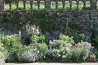 Summer border at Haddon Hall with roses climbing up the stone wall behind