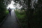A visitor walks on a trail at  the Theler Wetlands on the Hood Canal  in Belfair,  Washington. The Mary E. Theler Wetlands Nature Preserve covers some 75 acres, and the agreement with Washington Department of Fish and Wildlife expands the trail system to 135 acres. Jim Bryant Photo. ©2011. All Rights Reserved.