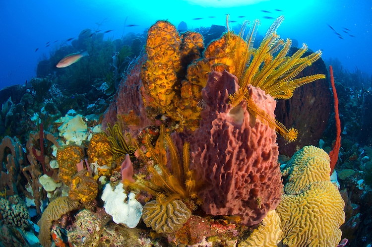Colourful seascape with sponges, corals and species of crinoid