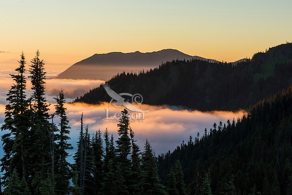 """Sunrise over Morse Creek drainage, Olympic National Park, WA.  Summer.  The far mountain ridge on the right is the """"Deer Park/Blue Mountain area.""""  Mount Baker is on the extreme left in the far distance across Puget Sound (covered by clouds).  Photo is taken from the Hurricane Ridge Road."""