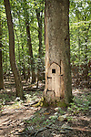 3110 Mountain rd Gainesville,Virginia Hobbit tree with door