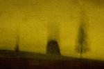 Three blurred trees