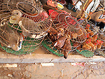 Chickens for Sale in Chinese Market