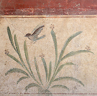 Fresco of bird and plants on a white background, from a small room in the Casa dell Efebo, or House of the Ephebus, Pompeii, Italy. This room is decorated in the Fourth Style of Roman wall painting, 60-79 AD, a complex narrative style. This is a large, sumptuously decorated house probably owned by a rich family, and named after the statue of the Ephebus found here. Pompeii is a Roman town which was destroyed and buried under 4-6 m of volcanic ash in the eruption of Mount Vesuvius in 79 AD. Buildings and artefacts were preserved in the ash and have been excavated and restored. Pompeii is listed as a UNESCO World Heritage Site. Picture by Manuel Cohen