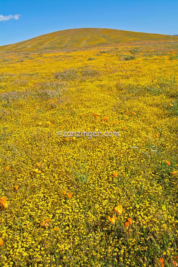 spring wildflowers in antelope - photo #23