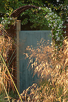 Sunlight shining thru ornamental grasses with blue garden door and arbor of white Clematis ternata aka paniculata Sweet Autumn Clematis vine