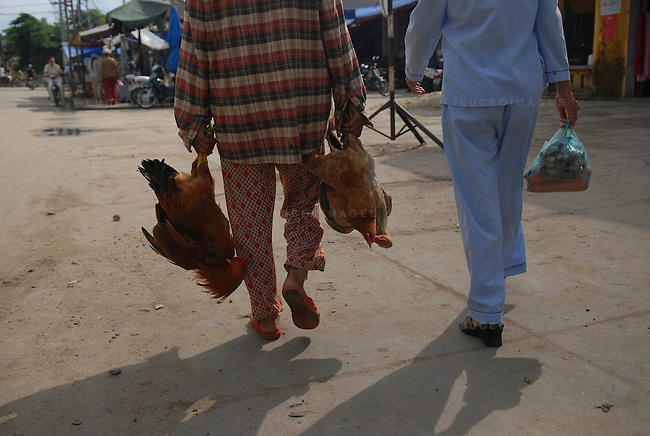 A woman brings chickens to the market to sell in Hoi An, Vietnam.
