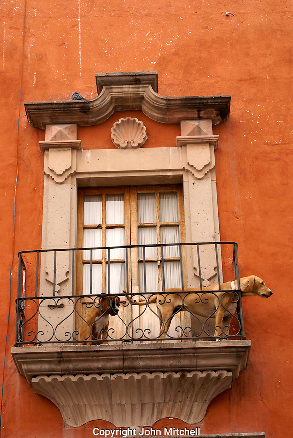 Two dogs on the balcony of a Spanish colonial building in San Miguel de Allende, Mexico