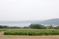 FINGER LAKES VINEYARDS<br /> Overlooking Keuka Lake<br /> The 11 Finger Lakes all formed over the last two million years by glacial carving of old stream valleys. New York