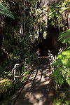 Hawai'i Volcanoes National Park, Big Island of Hawaii, Hawaii; surrounded by ferns and other vegetation, patchy sunlight illuminates the entrance to the Thurston Lava Tube