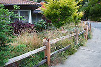 California native grasses behind split rail fence in front yard meadow garden by sidewalk