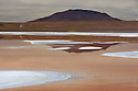 Bolivia, Altiplano, Laguna Colorada with flock of flamingos; the lake contains borax islands, whose white color contrasts with the reddish color of its waters, which is caused by red sediments and pigmentation of some algae.