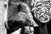 Boar Head with Glasses outside a Condiment Shop in San Gimignano, Tuscany, Italy