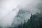 Coastal mountainous forest shrouded in fog.