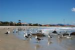 Gaivotas na beira do mar da praia de Itapoá, litoral norte de Santa Catarina, Brasil.