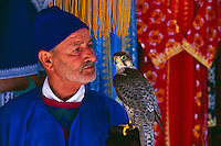 Falconer holds his falcon in the Medina of Marrakech, Morocco