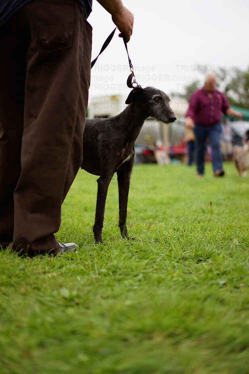 Lurcher at a dog show with owner