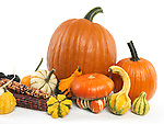 Pumpkins and gourds still life isolated on white background