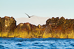 Isla St. Ildefonso, a volcanic island in the Gulf of California, is a protected seabird brooding and nesting area.