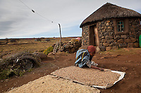 10 May 2011, Ha Tsekana village, Semonkong Community Council, Lesotho. Women dry out and process the wheat from the recent harvest.