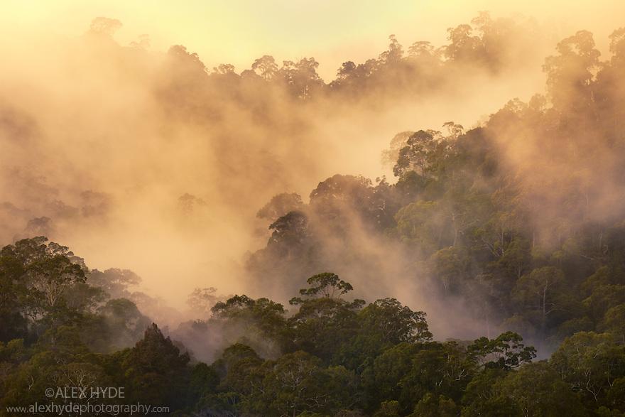 Rainforest at dawn, Maliau Basin, Sabah's 'Lost World', Borneo, Malaysia.
