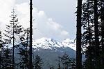 Olympic National Park, Washington State, WA, USA
