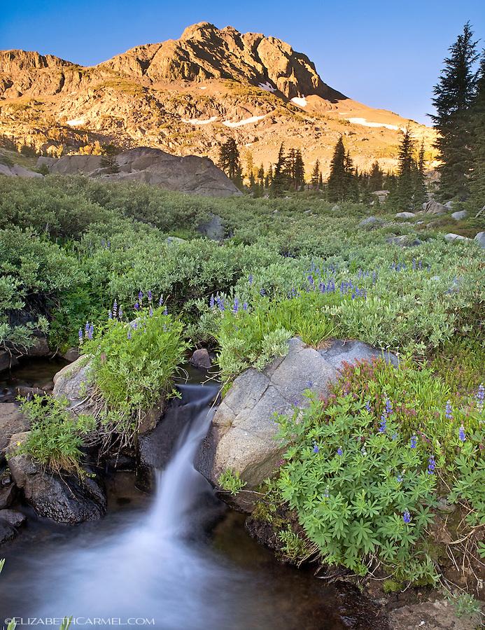 Lupine Creek