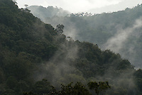 Misty cloud forest in the coffee growing region near Matagalpa, Nicaragua