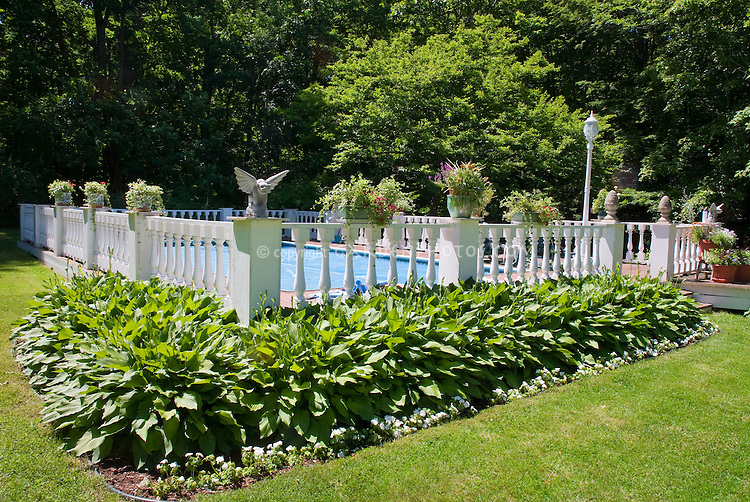 Swimming pool landscaping plant flower stock for Swimming pool landscaping plants
