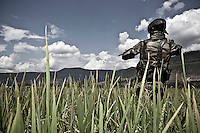 """An Indian soldier, belongs to the special forces deployed at Kupwara, stands guard at the crop fields outskirts of town. In northern Kashmir the Islamic militancy of """"Mujahideen"""" is spread out and often engaged in encounters and gun battles with the Indian troops, which have been deployed in the valley in an unofficial figure of more than 800,000 for a population of 15 millions, prompting it as one of the the world's most militarized regions. Kupwara district, Indian administrated Kashmir."""
