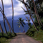 Ladies dresed in Sarees with children walking along palm covered country road. Fiji Islands, South Pacific.