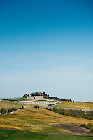 View over the undulating hills from Palazzone vineyards near Orvieto, Umbria, Italy