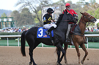 HOT SPRINGS, AR - March 18: Sonneteer #3 and jockey Richard Eramia in the post parade before finishing second in the Rebel Stakes (Gr.2) at Oaklawn Park on March 18, 2017 in Hot Springs, AR. (Photo by Ciara Bowen/Eclipse Sportswire/Getty Images)