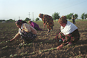 Working the land near Hissar, Tajikistan