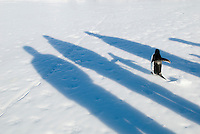 Shadows of scientists and an Adelie Penguin, Cape Crozier, Antarctica.