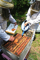 Queen-rearing hives are fed regularly.
