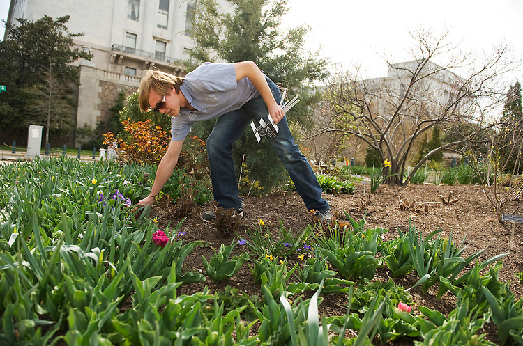 UNITED STATES - APRIL 04:  Adam Pyle, a gardener with the U.S. Botanic Garden, weeds and installs plaques that identify flowers and plants growing in Bartholdi Park at the intersection of Independence Avenue and 1st St., SW.  (Photo By Tom Williams/Roll Call)
