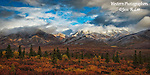 A photo of Denali's fall colored tundra and snow capped mountains.