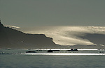 Glacier and small icebergs of Dundee Island Antarctic,Antarctica,7th continent, southern hemisphere