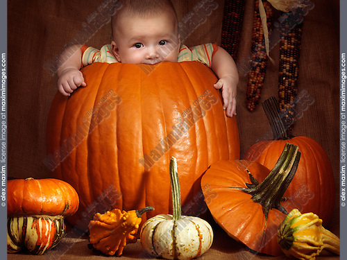 Baby boy sitting inside a big pumpkin. Fall season holidays Thanksgiving and Halloween humorous artistic still life.