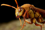 Ants & Wasps
