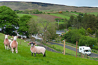 Ballycastle, Northern Ireland, United Kingdom, May 2011. Watertop Farm is the hill farm of Patsy and Terry McBride.The name Watertop was chosen for the farm as a part of the Carey river rises as a fresh water spring nearby. The farm is a sheep farm, and keeps about 500 sheep, and 30 cows. In 1986 it opened to the public and became the first open farm in Ireland. Watertop farm is also a camping with caravan and tent sites with watrer and electricity. Famed in poetry, song, myth and magic there are nine Glens of Antrim, each endowed with an evocative name and each weaving its own special magic. Lush, green secret places with the sound of water alternately softly swirling, then falling in dramatic torrents, the nine Glens delight the senses.  Entwined with their rich beauties are equally diverse and magical stories, combining the colourful history, myth and the traditions of the communities within the glens. For decades travellers stayed away from the sectarian violence, but since the end of'The Troubles' more and more people start discoving the beauty of Belfast and the Antrim Coast Causeway. Photo by Frits Meyst/Adventure4ever.com
