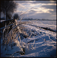 Winter Landscape, Suffolk | Colour