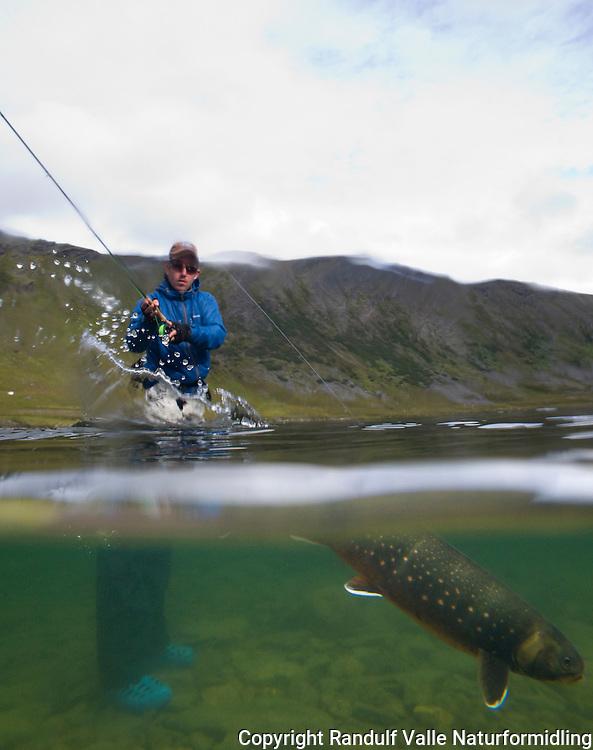 Mann kjemper med røye i Rekvikvatnet på Sværholt. ---- Man fighting arctic char.