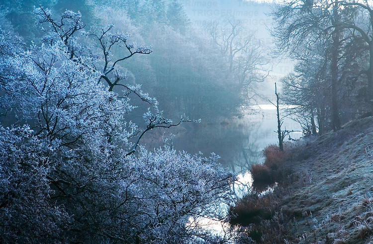 A winter riverside scene with trees and frost