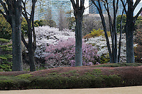Distant Tokyo skyscrapers are the backdrop for the clipped azalea bushes and flowering cherry blossom trees in Ninomaru (the Second Citadel) at Higashi-Gyoen