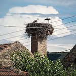 Storks next and take flight from the top of a chimney in the village of, Archar, Bulgaria