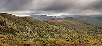 Dark skies at sunset over Kahurangi with native forest, Kahurangi National Park, Nelson Region, South Island, New Zealand
